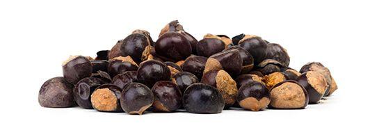 guarana-seeds